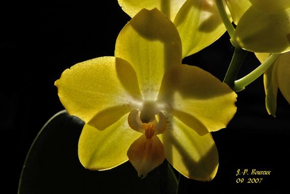 fleur en contre-jour