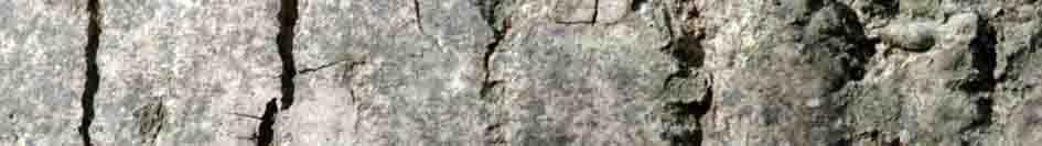 écorce de frêne