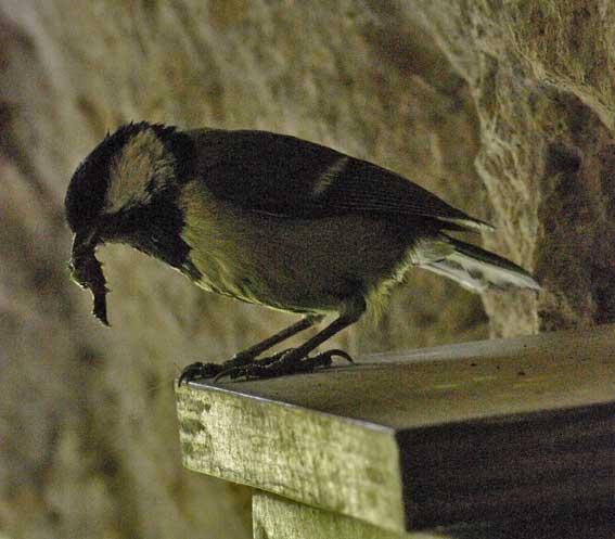 attente de nourrissage sur le balcon