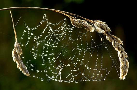 toile d'araignée enguirlandée