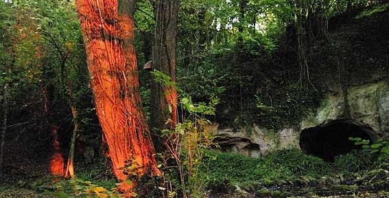 rayons de feu sur écorce de frêne