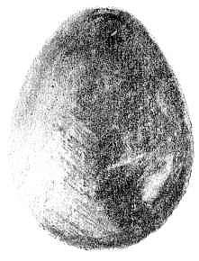 dessin d'une coquille d' oeuf en noir et blanc