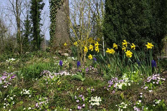 printemps jaune et bleu
