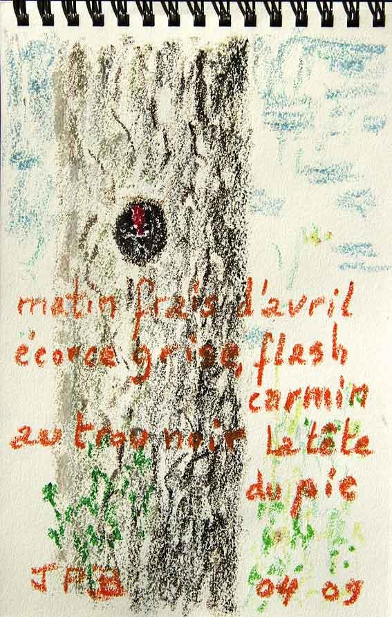mots et couleurs d'avril dans le sous-bois