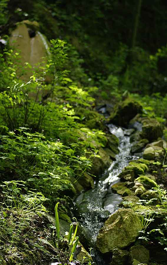 ruisseau et cascade
