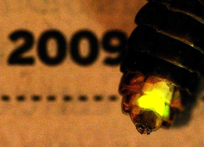 luminescence avec appoint artificiel