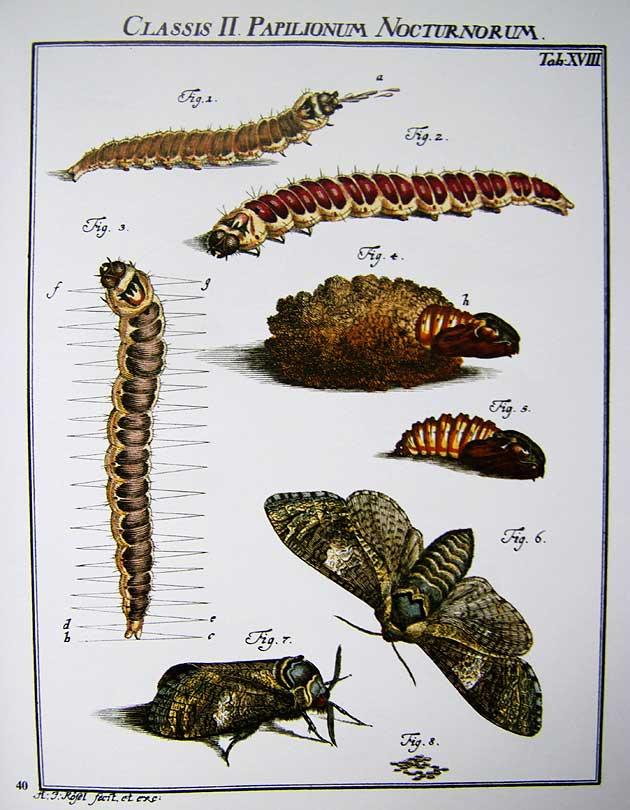 Planche d'insectes de R. von Rosenhof