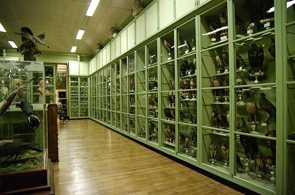 galerie d'ornithologie