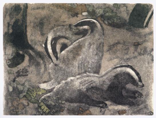 blaireaux, gravure de Robert Hainard