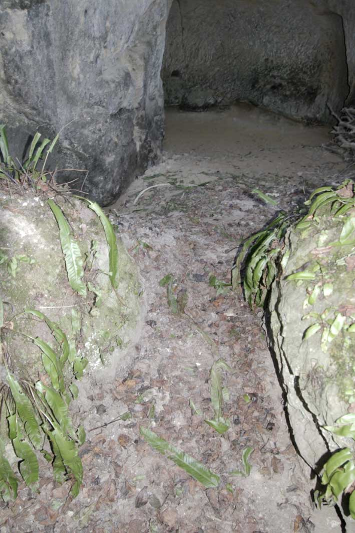 entrée de creute avec frondes de scolopendres découpées