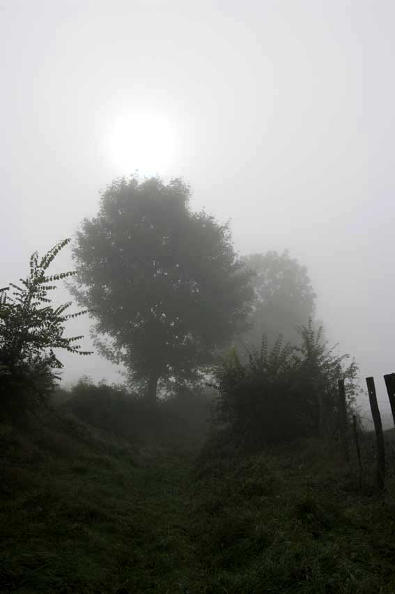 brouillard dans le chemin creux