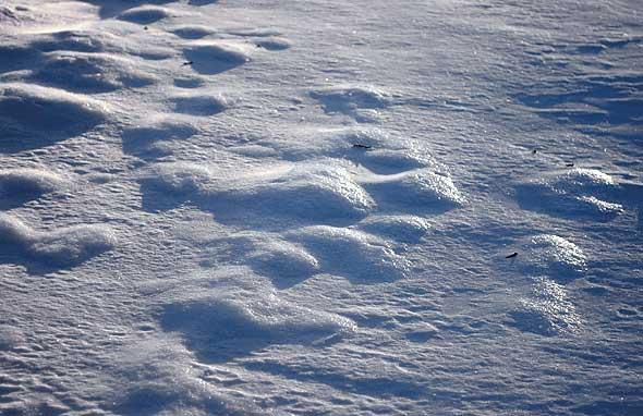 neige sur le Chemin des Dames à Paissy