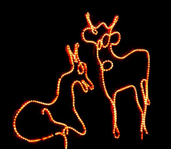 un âne et un boeuf ordinaires et devenus célèbres