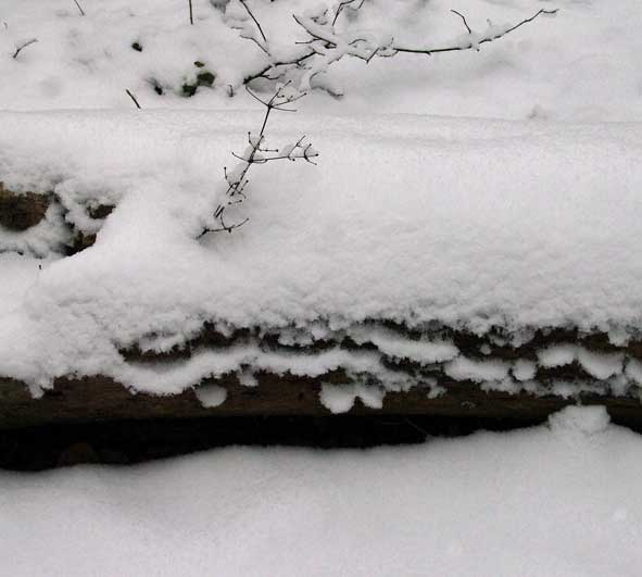 tronc gisant recouvert de neige